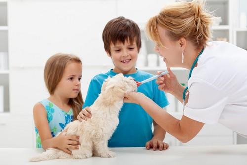 Vaccinations  Mobile, AL